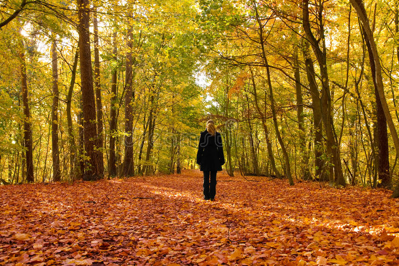 Download Alone in autumn forest stock image. Image of forest, blond - 11653353