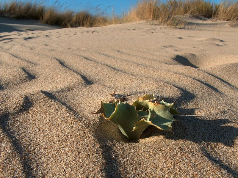 Download Alone In The Beach stock photo. Image of plant, desert - 340714