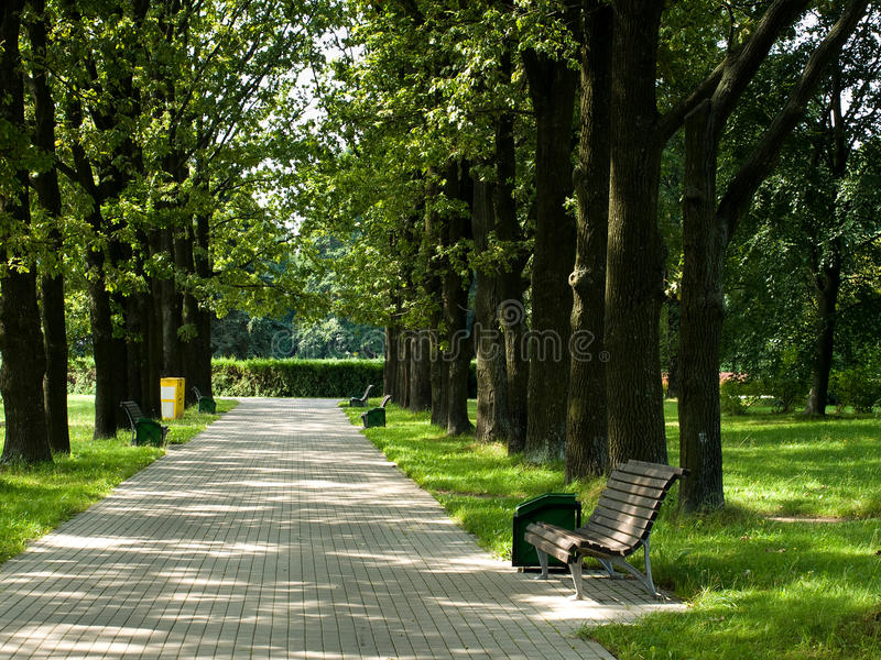 Download Alone bench in park stock image. Image of bench, park - 24533655