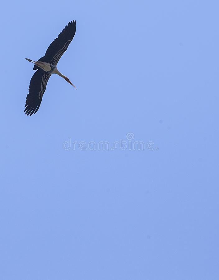 Alone bird fly royalty free stock images