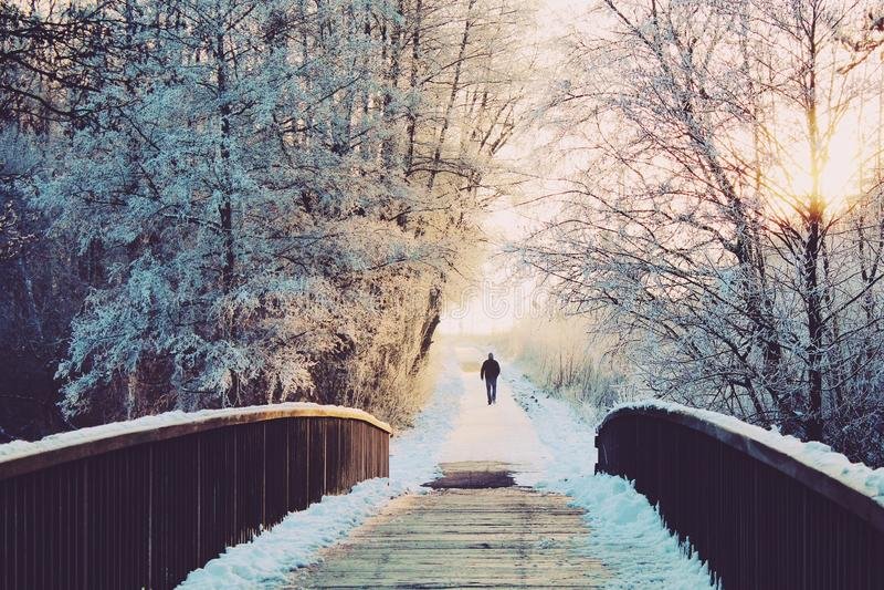 Alone, Branches, Bridge royalty free stock photo