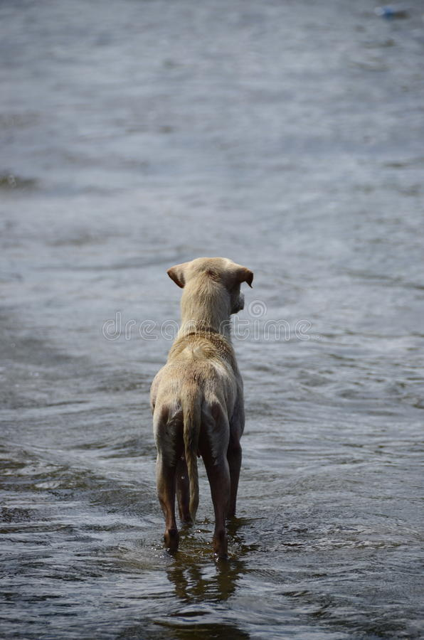 Alone Dog royalty free stock photo