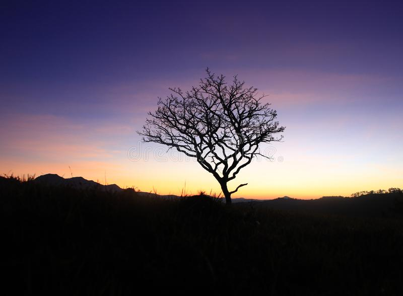 Alone dry tree on mountain royalty free stock photography