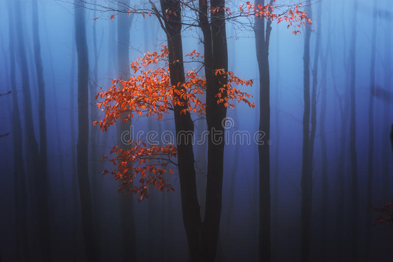 Alone among the fog royalty free stock photo