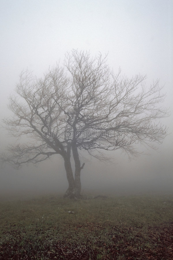 Download Alone fog's tree stock image. Image of dream, harmony, lonely - 607813