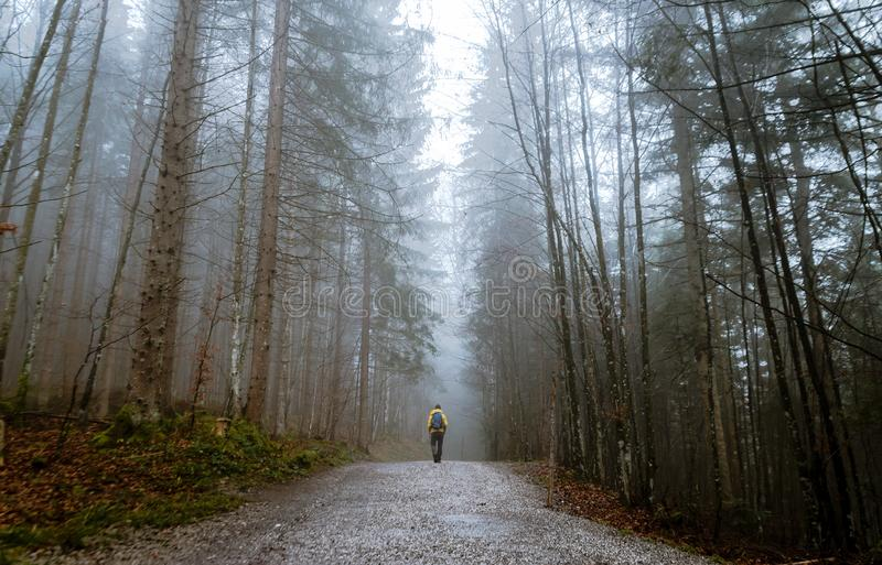 Alone In A Forest royalty free stock photography