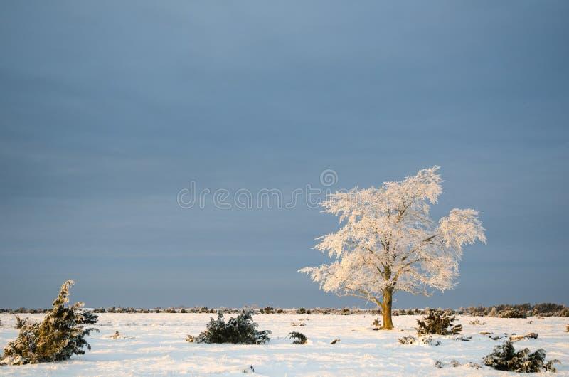Alone frosty tree in a plain landscape. Alone frosty tree at Stora Alvaret, a great plain area at the swedish island Oland royalty free stock photos