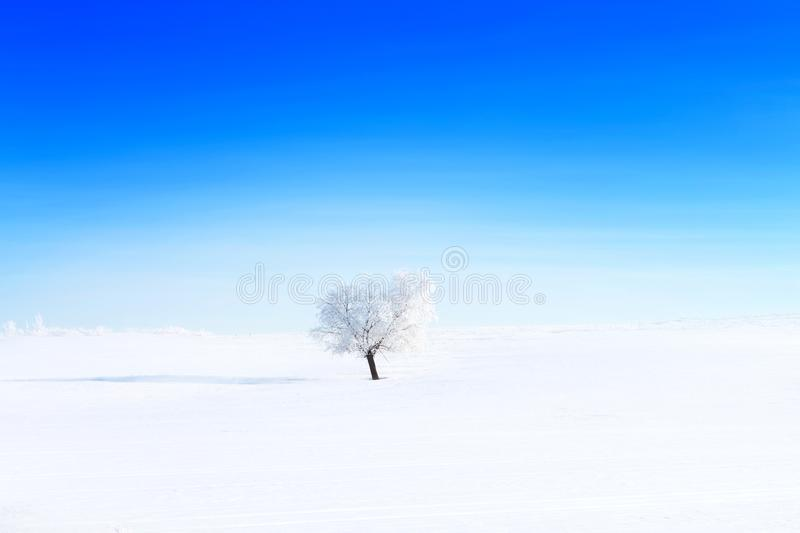 Alone frozen tree on winter field and blue sky royalty free stock photography
