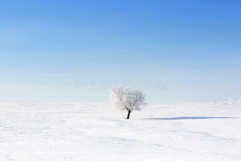 Alone frozen tree in winter snowy field stock photo