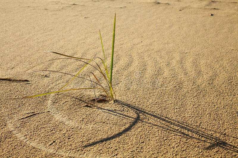 Download Alone grass in desert stock photo. Image of circle, grass - 11920634