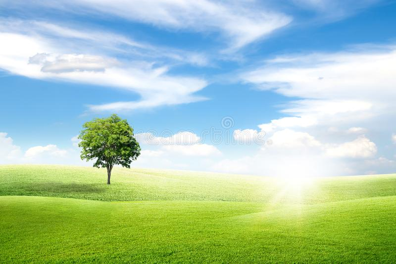 Alone green tree with grass natural meadow field and little hill with white clouds and blue sky in summer seasonal. stock photo