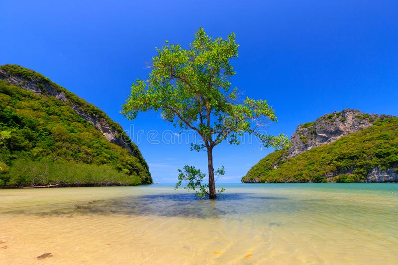 Alone mangrovia fotografia stock libera da diritti
