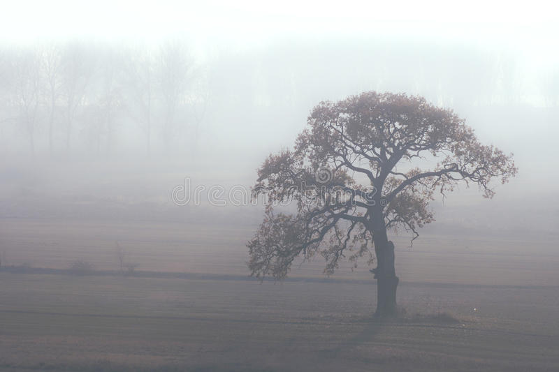 Download Alone in the misty morning stock photo. Image of late - 27486952