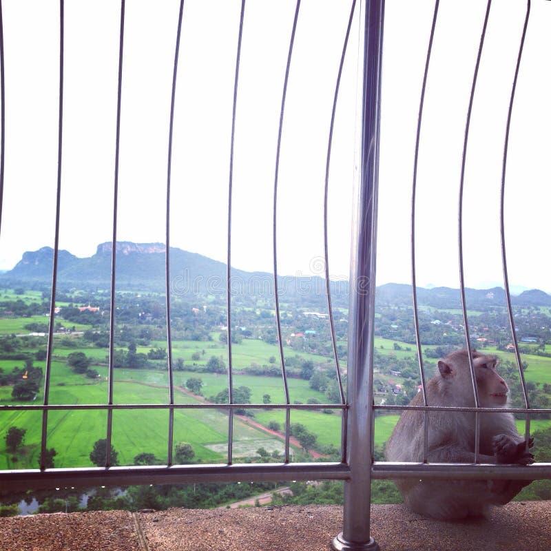 Alone monkey stock image
