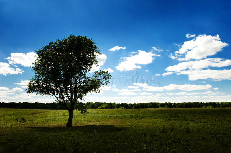 Download Alone tree stock photo. Image of grass, environment, beautiful - 12084522