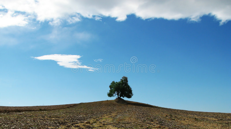 Alone tree. Between field and clouds stock photo