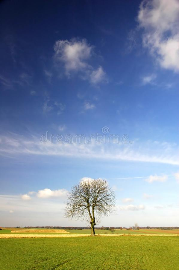 Download Alone tree stock photo. Image of clouds, branches, cumulus - 2073766