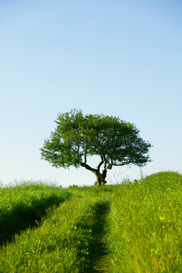 Download Alone Tree Stock Image - Image: 22771471