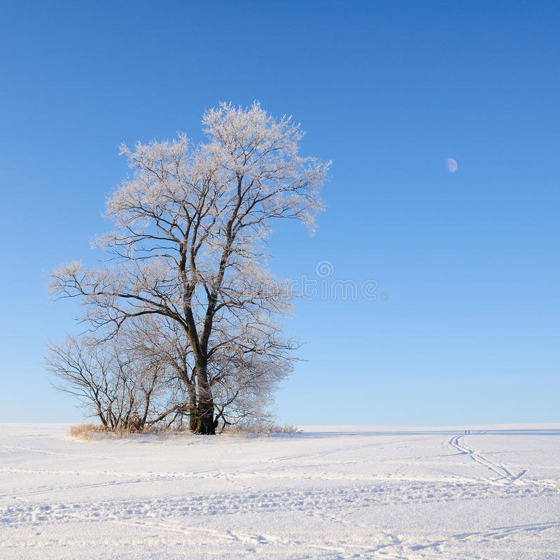 Download Alone tree stock photo. Image of horizon, branch, glow - 28519762
