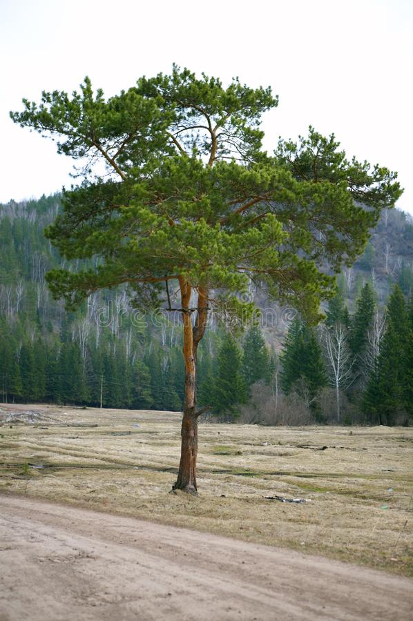 Download Alone tree stock image. Image of idyll, blue, clear, holiday - 5682249