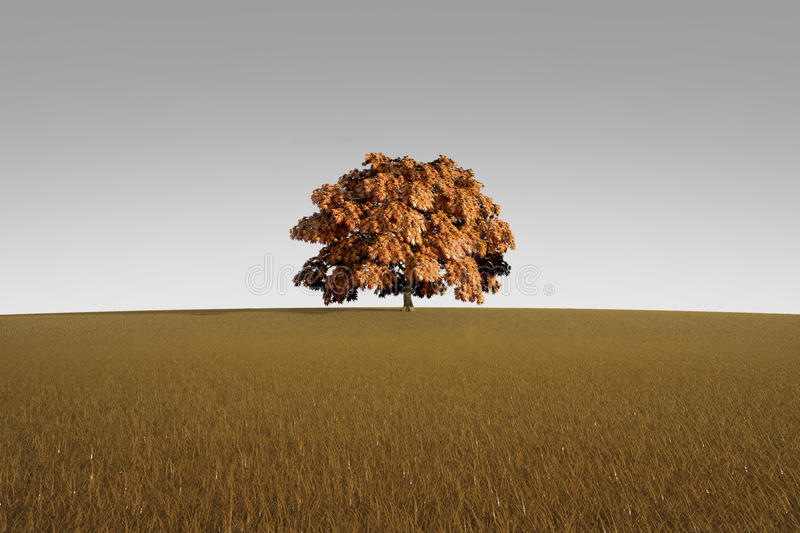 Download Alone Tree In Autumn Royalty Free Stock Photography - Image: 13249527
