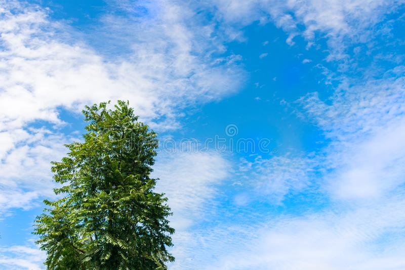 A alone tree backing by scattered cloud blue sky stock images