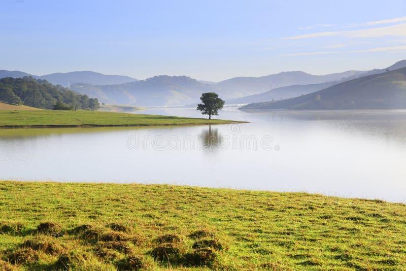 Alone tree in Dankia lake. Dalat, Vietnam stock photography
