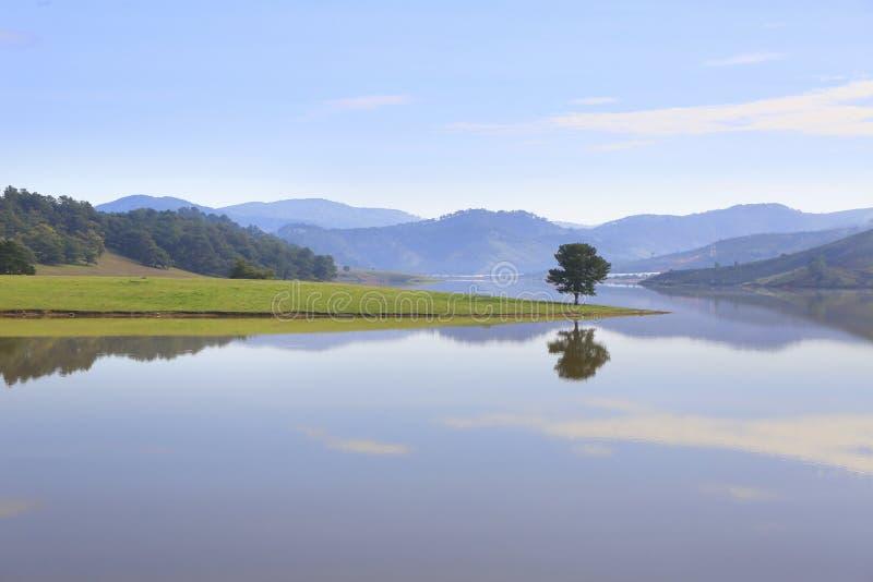 Alone tree in Dankia lake. Dalat, Vietnam stock photo