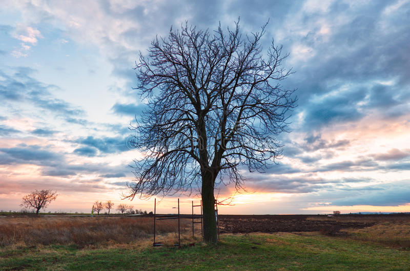 Alone Tree on dramatic sunset royalty free stock photos