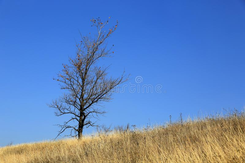 Alone tree on dry meadow stock images