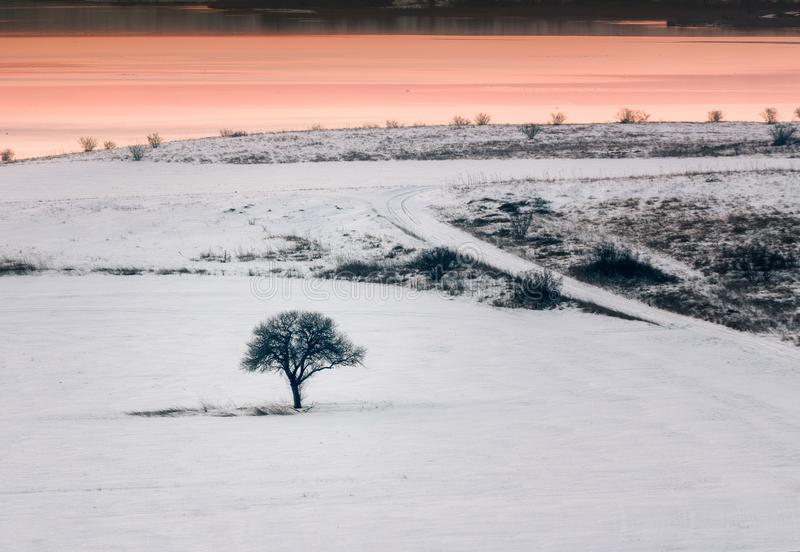 Download Alone Tree In A Field At Sunset, Winter Season Stock Image - Image of clear, outdoor: 110727309