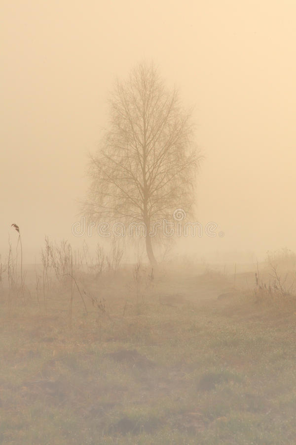 Alone tree in fog. Mystical background of the tree which standing alone in the field in fog. The sun can not break through the thick layer of smoke created by stock images