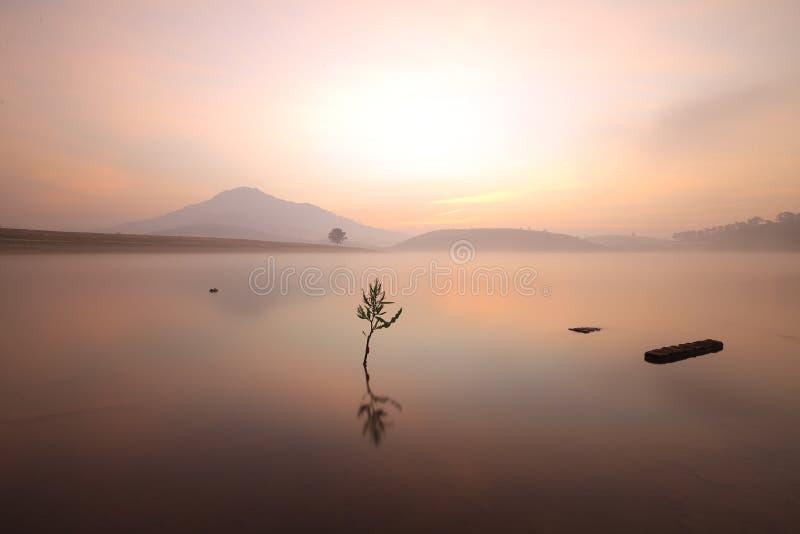 Alone tree in lake in sunny day. In Dankia Lake stock photo