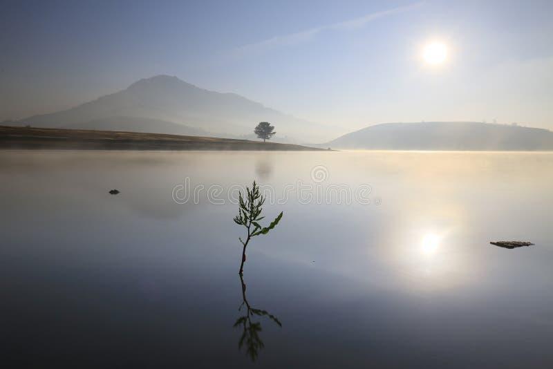 Alone tree in lake in sunny day. In Dankia Lake stock images