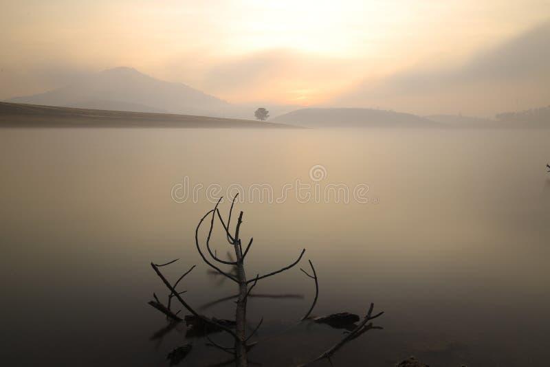 Alone tree in lake in sunny day. In Dankia Lake stock photography