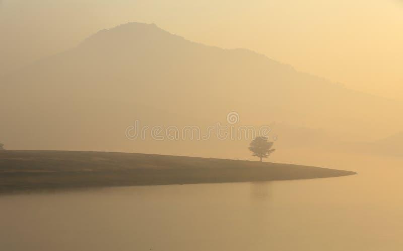 Alone tree in lake in sunny day. In Dankia Lake royalty free stock photo