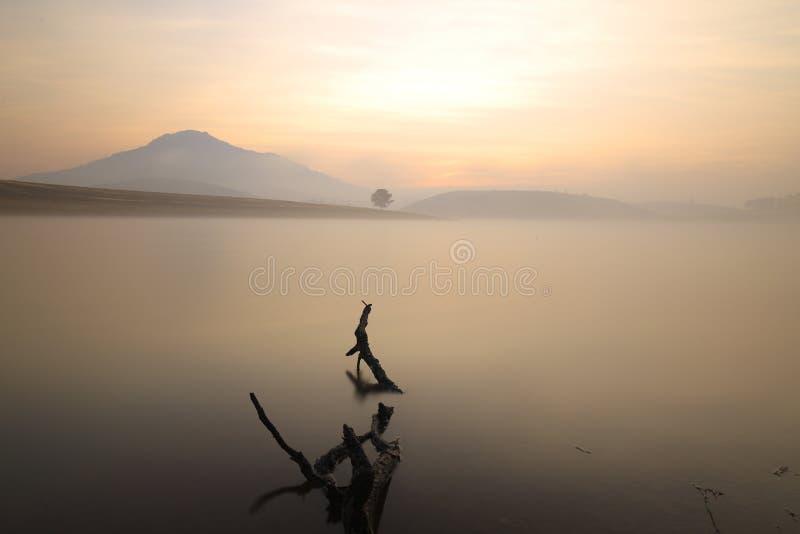 Alone tree in lake in sunny day. In Dankia Lake royalty free stock image