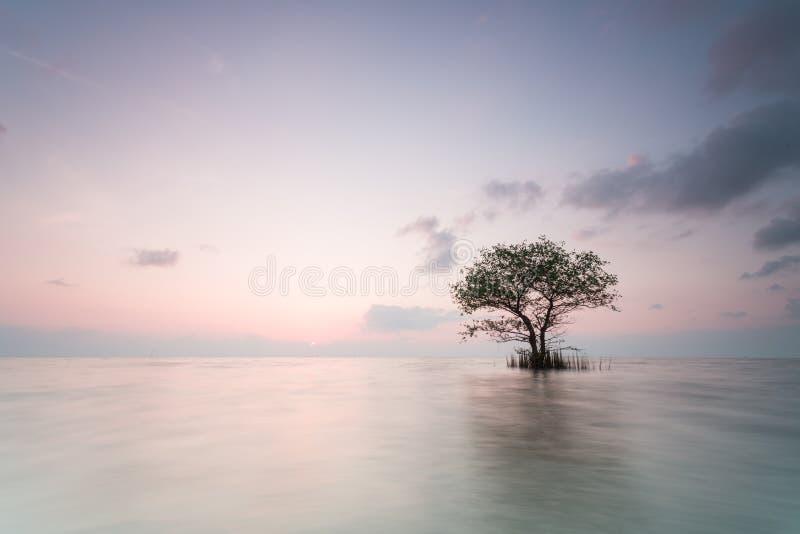 Alone tree stock photos