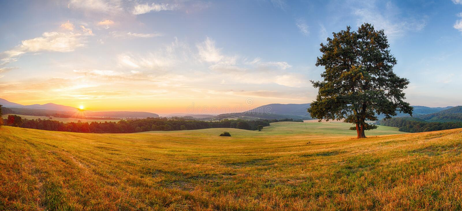 Alone tree on meadow at sunset with sun - panorama royalty free stock photography