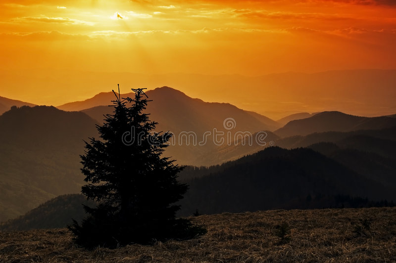 Alone tree in the mountains royalty free stock image