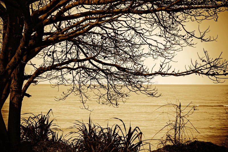 Alone tree near the sea. With sky royalty free stock images