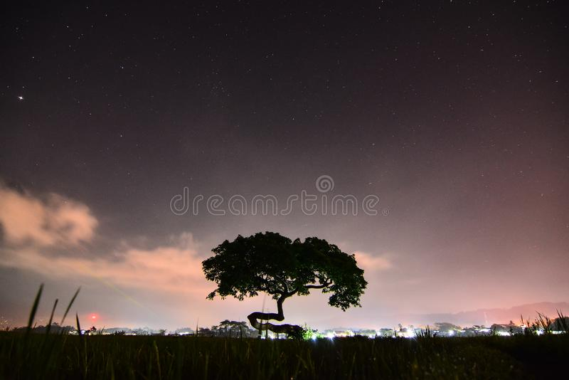 Alone tree at the night. Landscape, plant, nightscape, cloud, field royalty free stock photography