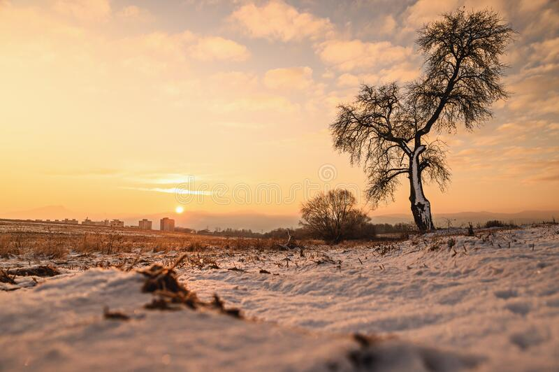 Alone tree in orange winter nature, edit space. Photo in High Quality royalty free stock photos