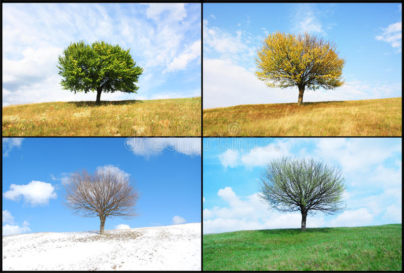 Alone tree in for season stock photography