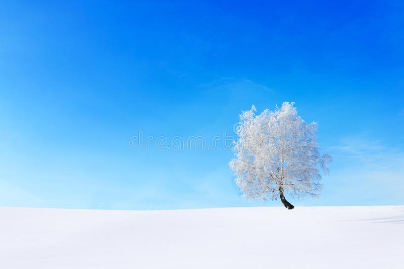 Alone Tree in the snow on a field winter royalty free stock photography
