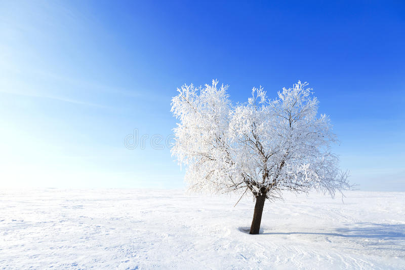 Alone Tree in the snow on a field winter stock photos