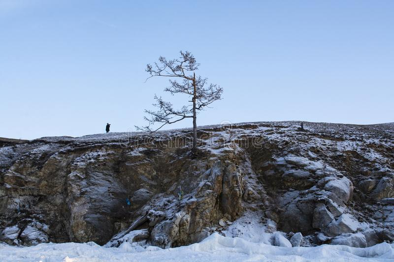 Alone tree in winter on cliff, landscape image, landscape photography stock photo