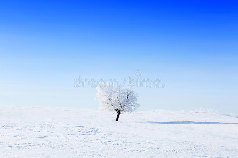 Alone winter tree in a field with blue sky stock images