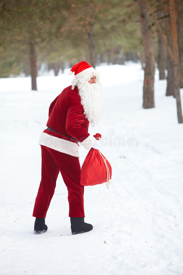 Download Alone in winter wood stock image. Image of natale, cold - 24309209