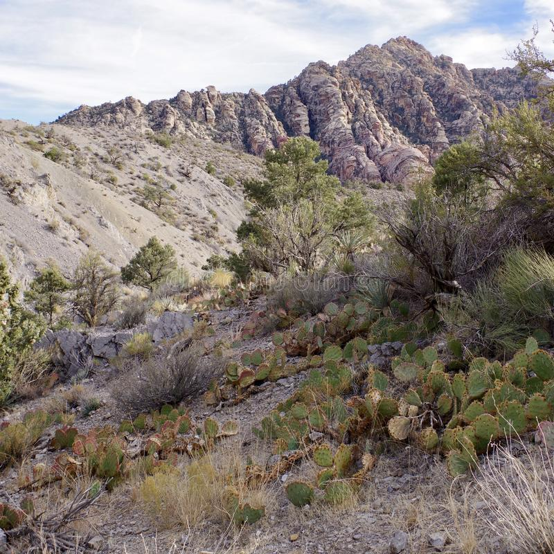 White Rock, Willow Springs, Red Rock Conservation Area, Nevada, USA. Along the hiking trails on the White Rock Loop in Willow Springs, Red Rock Conservation Area royalty free stock photo
